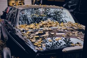 coche boda otoño