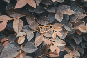 bodas toledo
