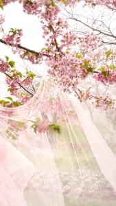 Flor de almendro en bodas